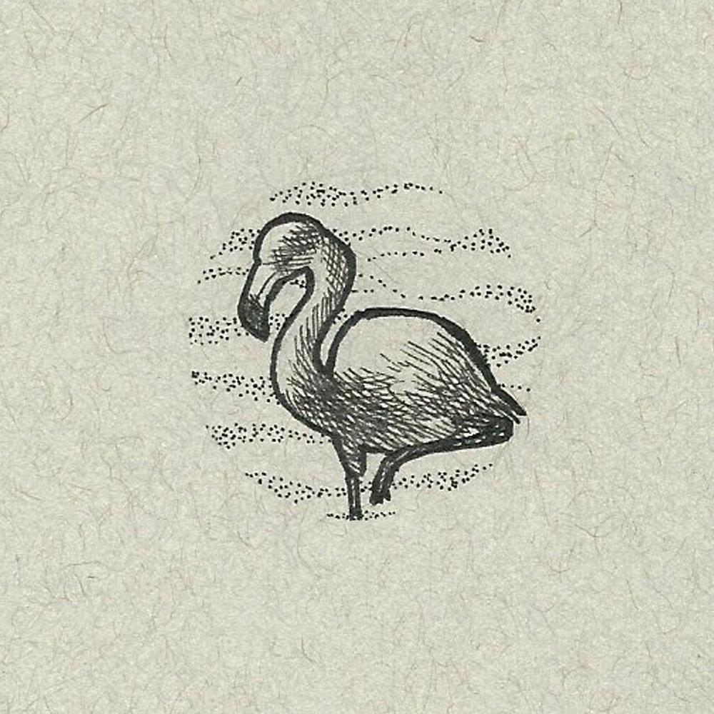 024_Glossary_Flamingo.jpg