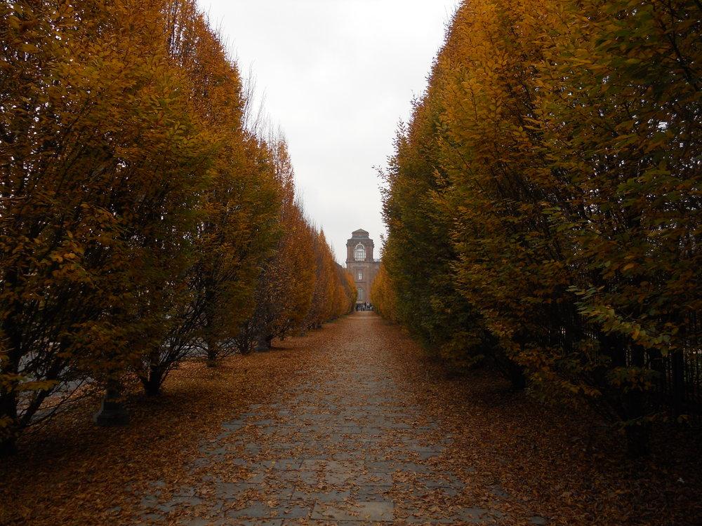 __12_-_ITALY_-_Venaria_Reale_-_vialealberato_in_autunno_-_Autumn_(_fall_)_boulevard_(_avenue_of_trees_)_Turin.JPG