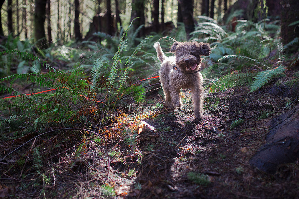 truffle-hunting-paola-thomas-photography-3-of-8.jpg