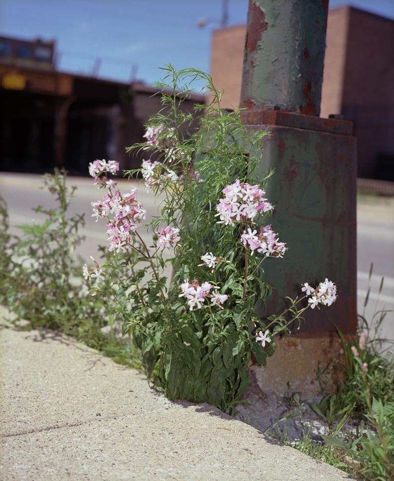 660R&F_flower2_lr.jpg