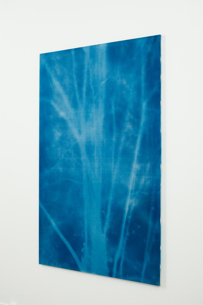 Philippe Durand Sans titre #9, 2016 cyanotype sur toile 191 x 120 cm
