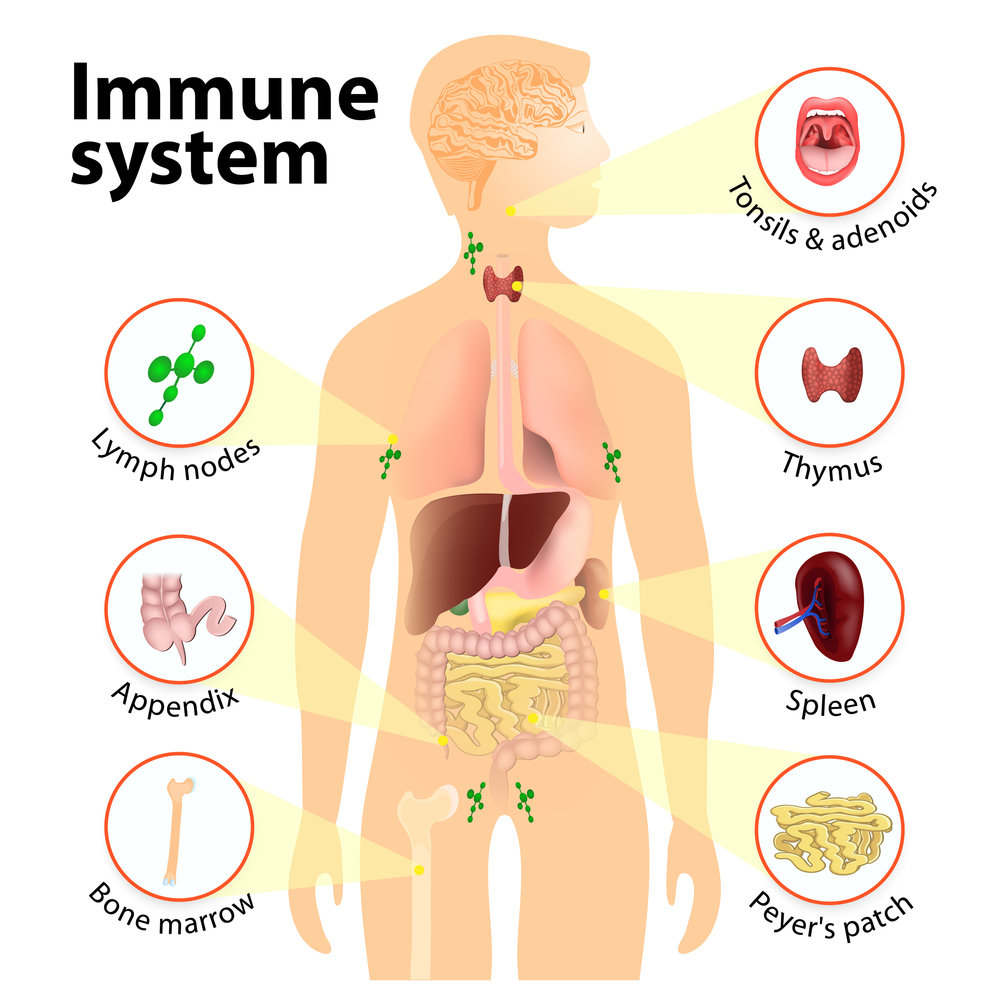 Immune System Research
