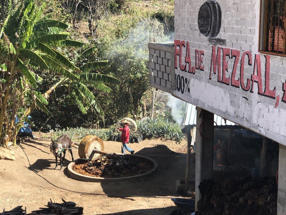 Making mezcal in a village in Oaxaca