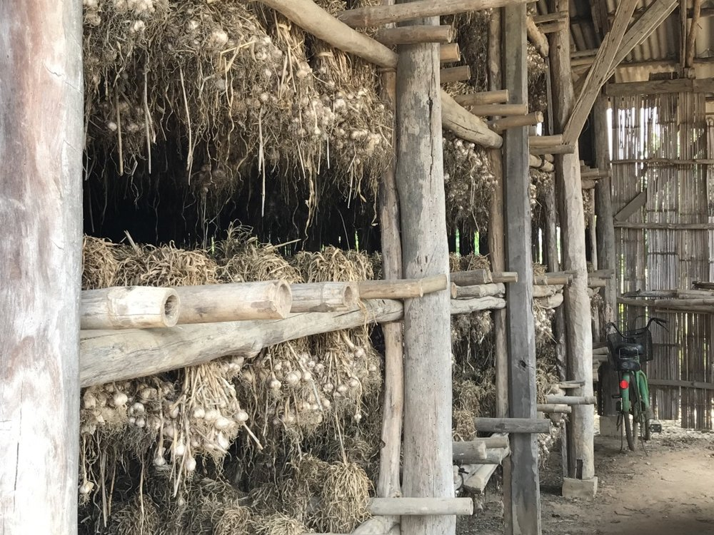 Garlic hanging to dry at Sarisa's family farm.