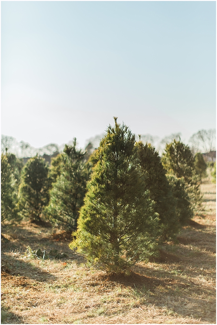 SarahSidwellPhotography_country cover christmas tree farms_ nashville engagement photographer_0043.jpg