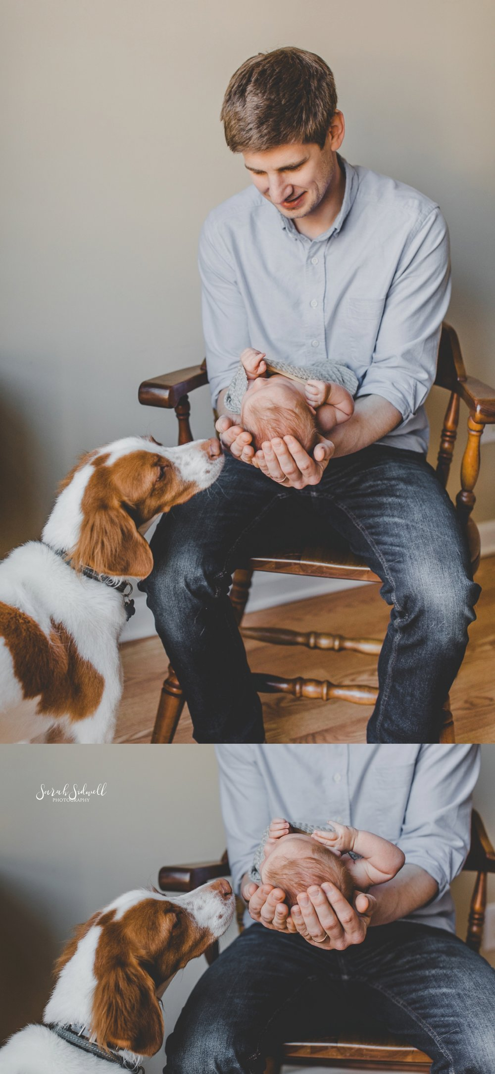 A puppy checks out his new baby.