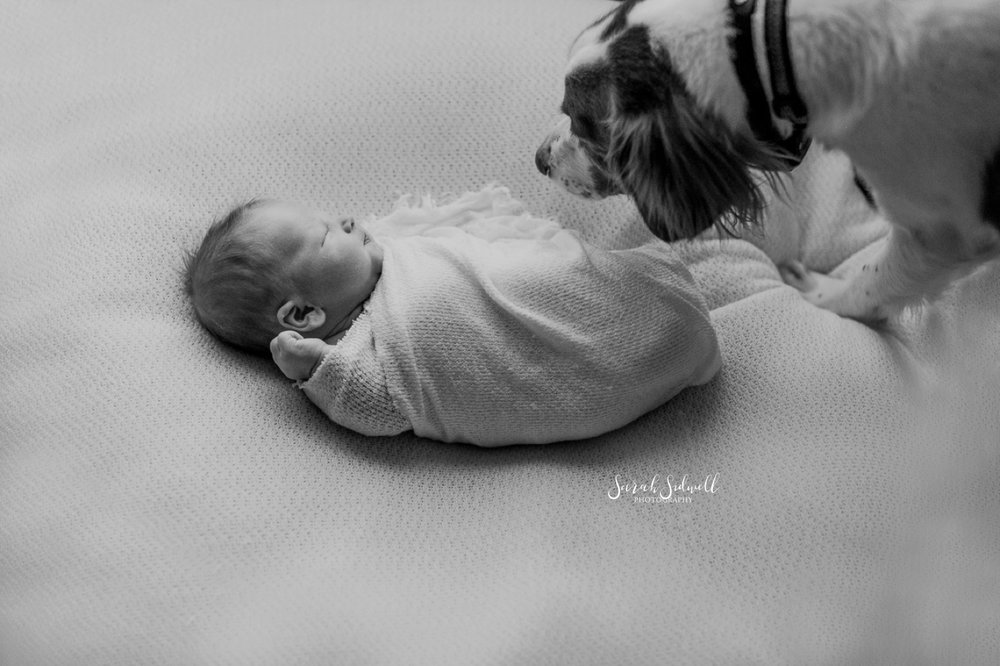 A dog sniffs a newborn.