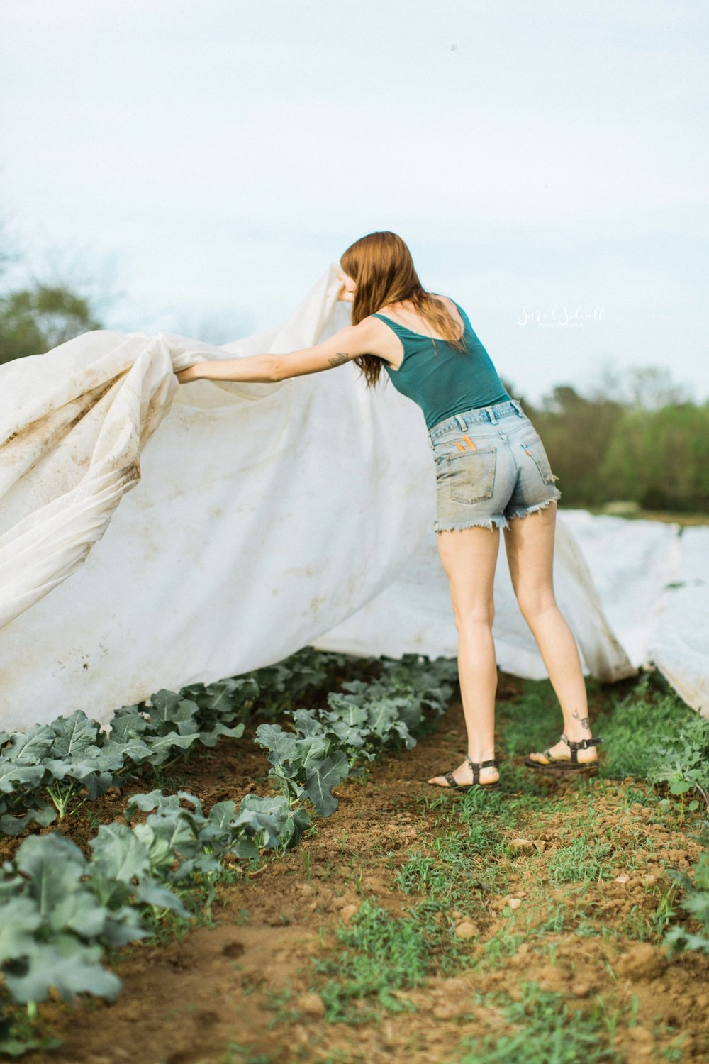 A woman covers a garden with a sheet.