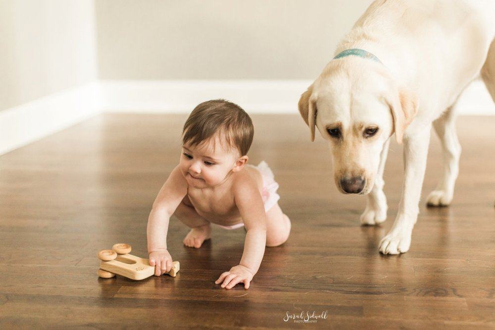 A dog walks next to a baby.