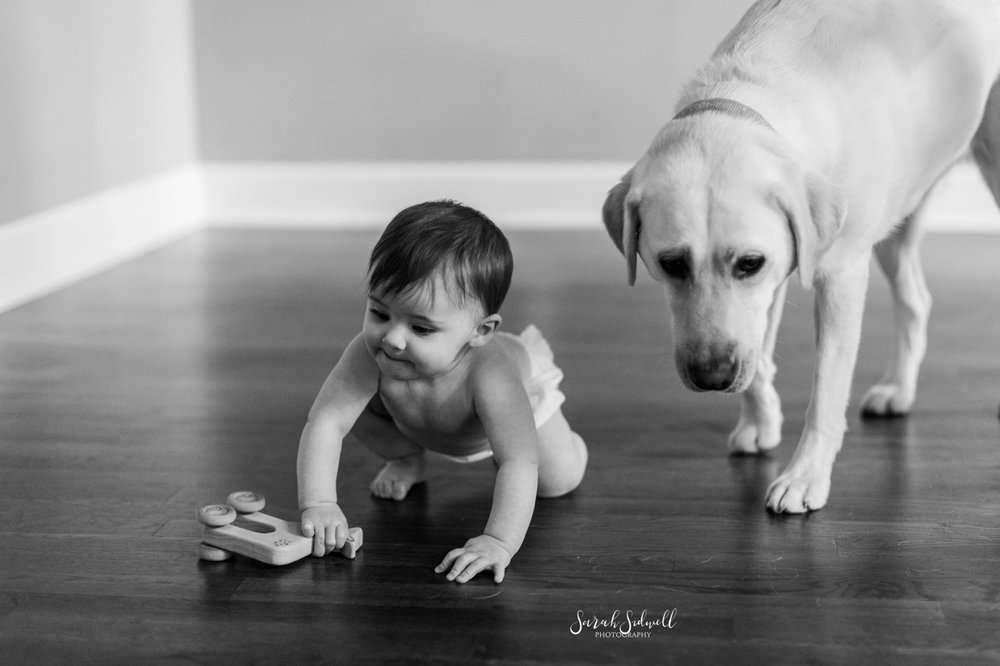 A dog plays with a baby girl.