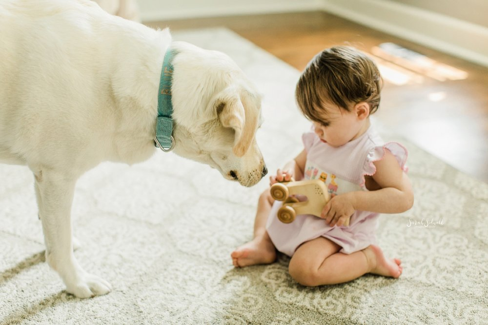 A baby plays with her dog.