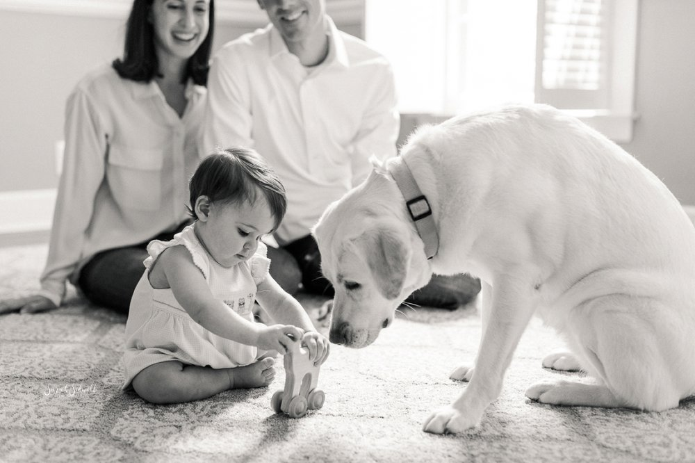 A dog sniffs a toy from a baby girl.