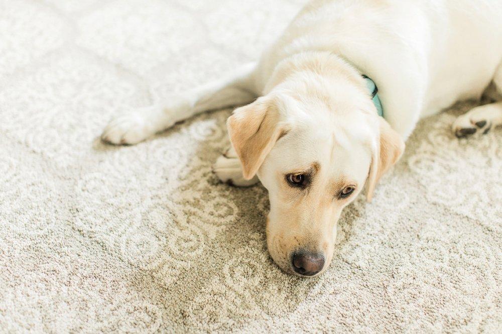 A dog lays on the floor.