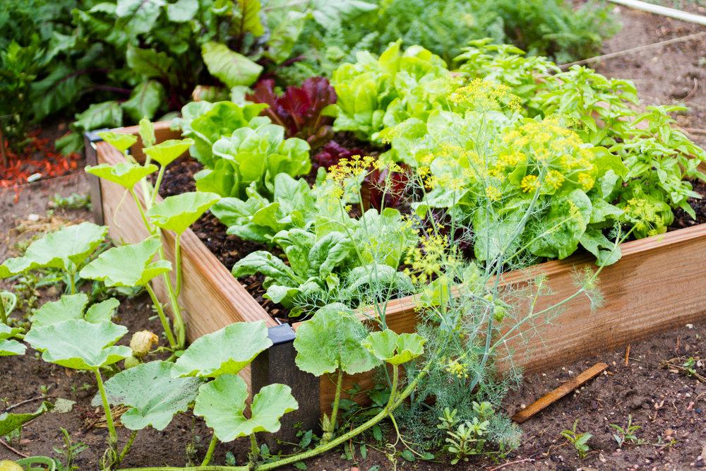 Oleastro – Reichhaltige Ernte und Vielfalt auf dem Teller