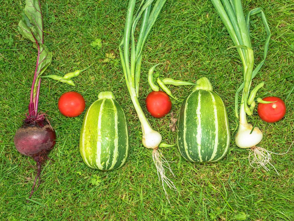 Workshops & Vorträge - In meinen Workshops und Vorträgen erfahren Sie in kleiner Runde alles über den Gemüseanbau im Hausgarten und auf dem Balkon. Für Anfänger und FortgeschritteneWorkshops: 3 Stunden á 55,- € Vorträge: 1,5 Stunden, á 25,- €