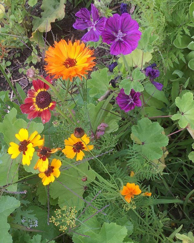 Essbare Blüten- nicht nur auf dem Teller schön. #Blüten #blossom #vegetable #vegetablegarden #gemüse #veggie #berlin