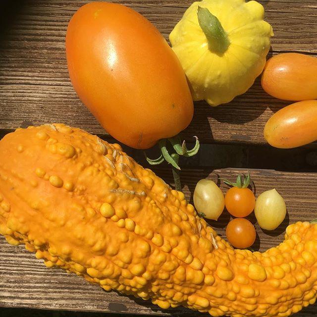 Heute mal gelb-orange....#gesundessen #selbstversorger #healthyfood #vegetables #gemüse #veggie #veganfood #gemüsegarten #berlin