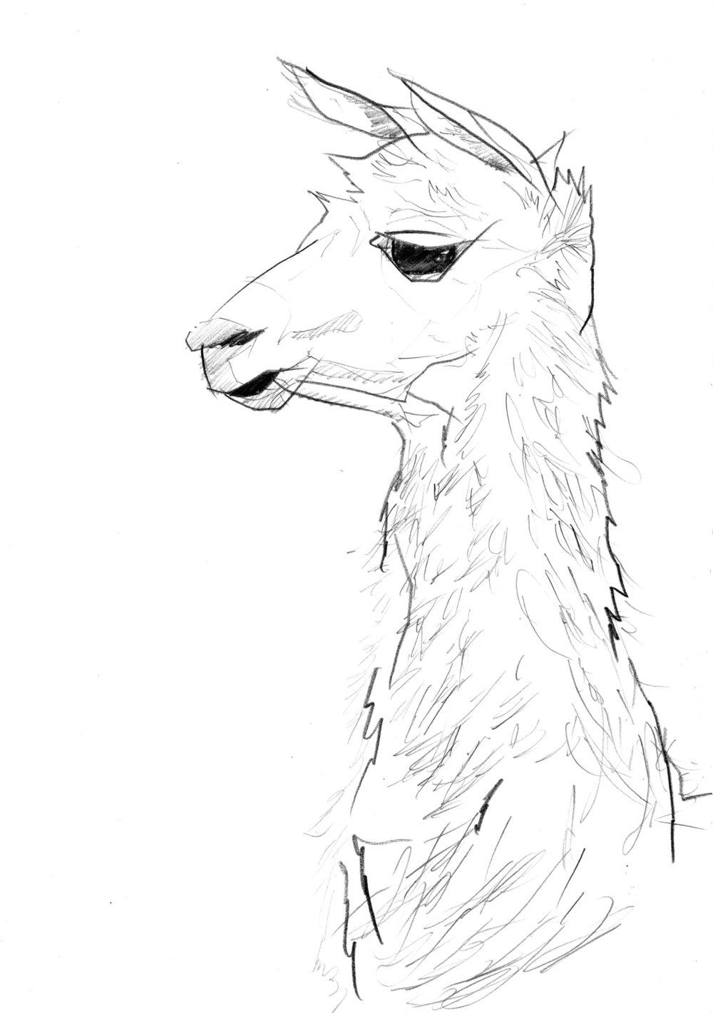 Llama-small.jpg