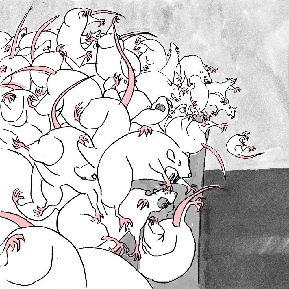 RATS-small.jpg