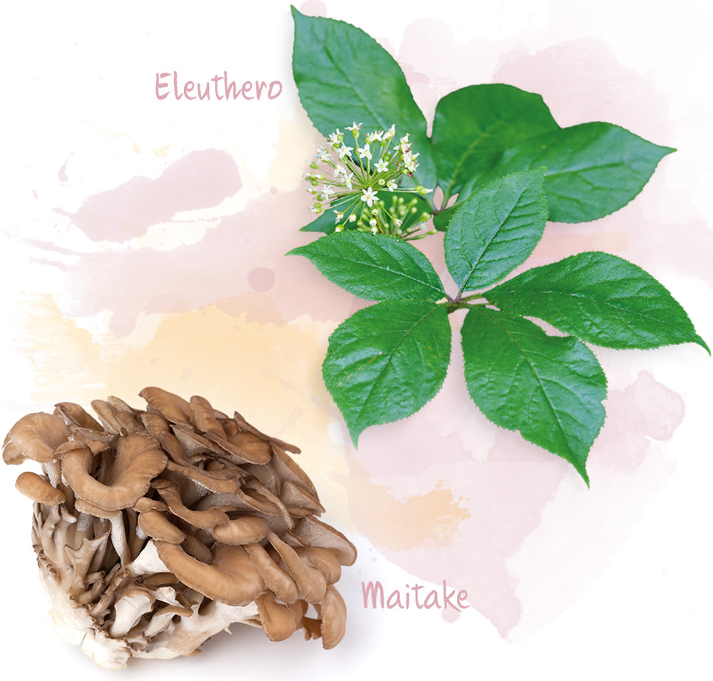 Eleuthero and Maitake