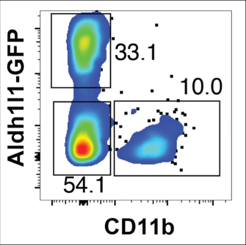 Flow cytometry of developing glia