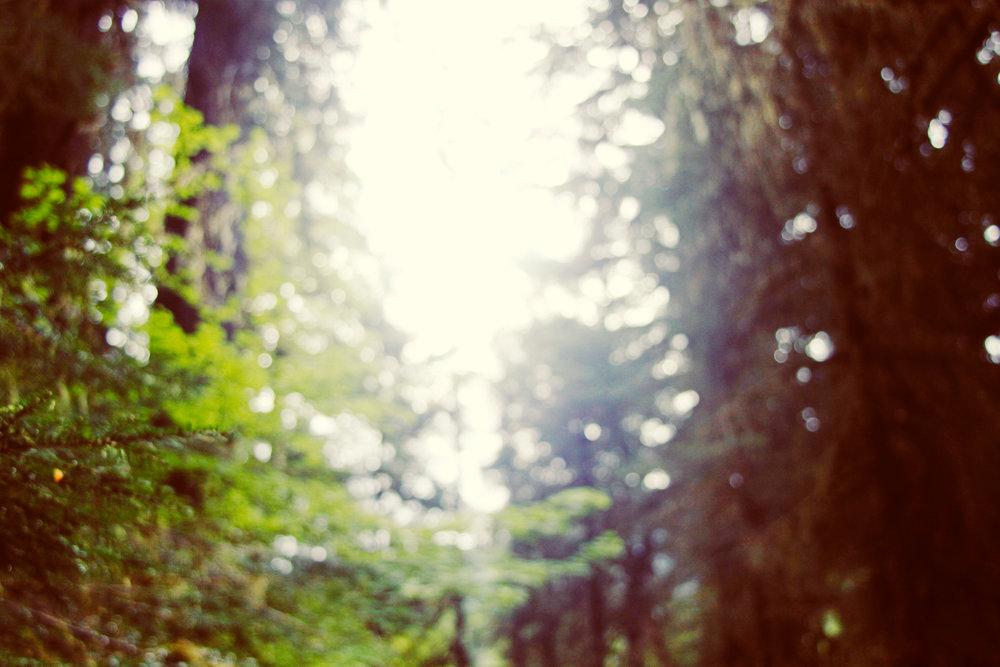 Rainforest-2401.jpg