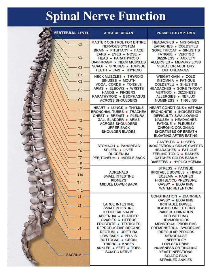 Spinal Nerve Function.jpg