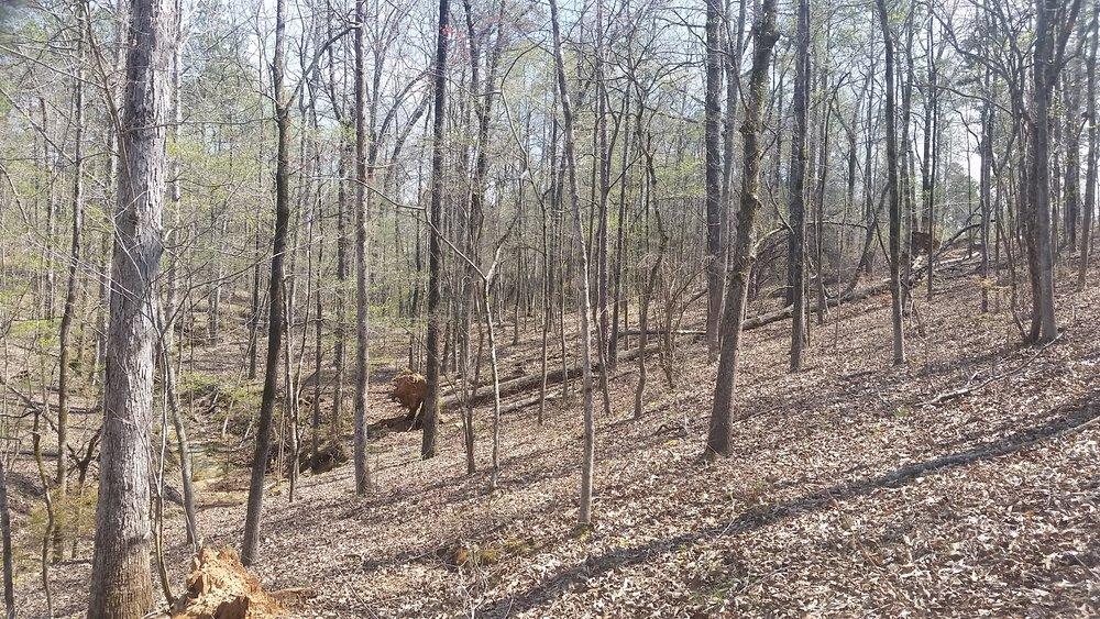 Timberland Appraisal