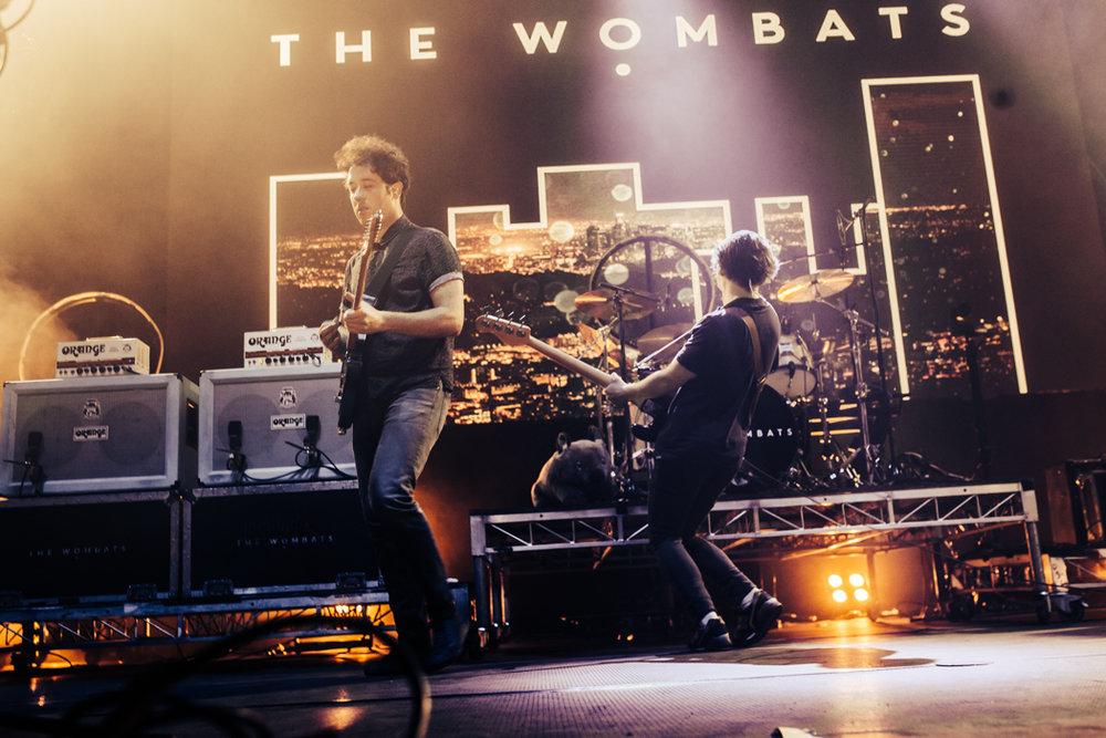 wombats-2.jpg