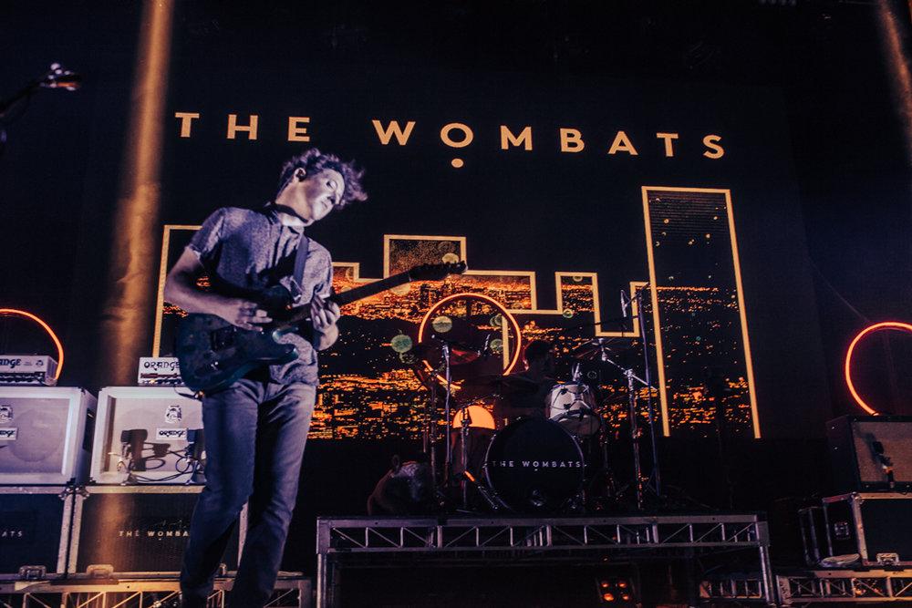 wombats-3.jpg
