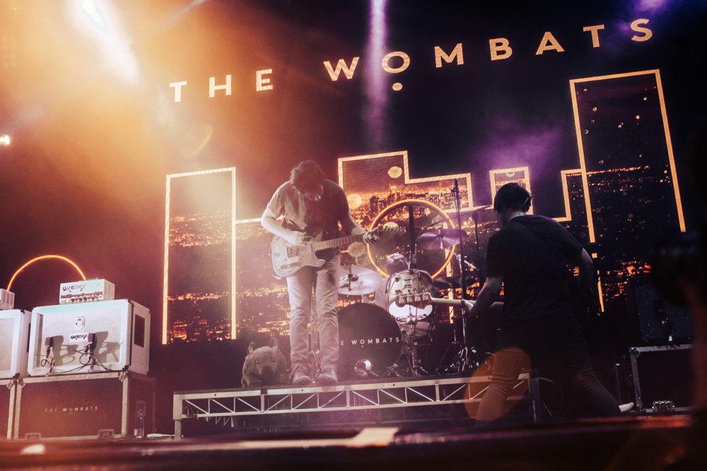 wombats-7.jpg