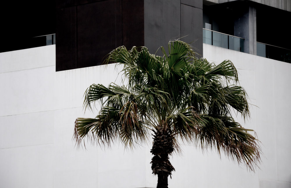 Palms Outside Museum of Contemporary Art Australia
