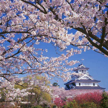 SAKURA IN THE SPRINGTIME Travel special outlining what to do in Japan, right now.