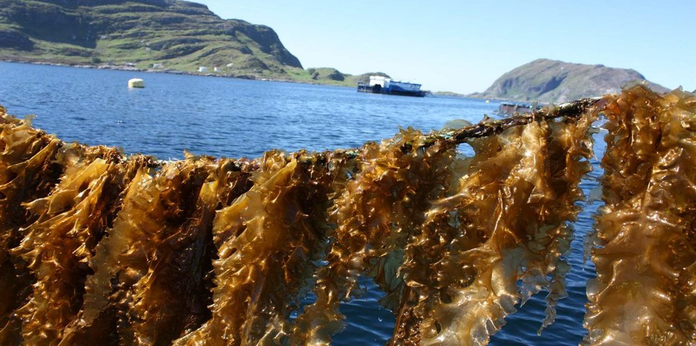 seaweed sustainable food