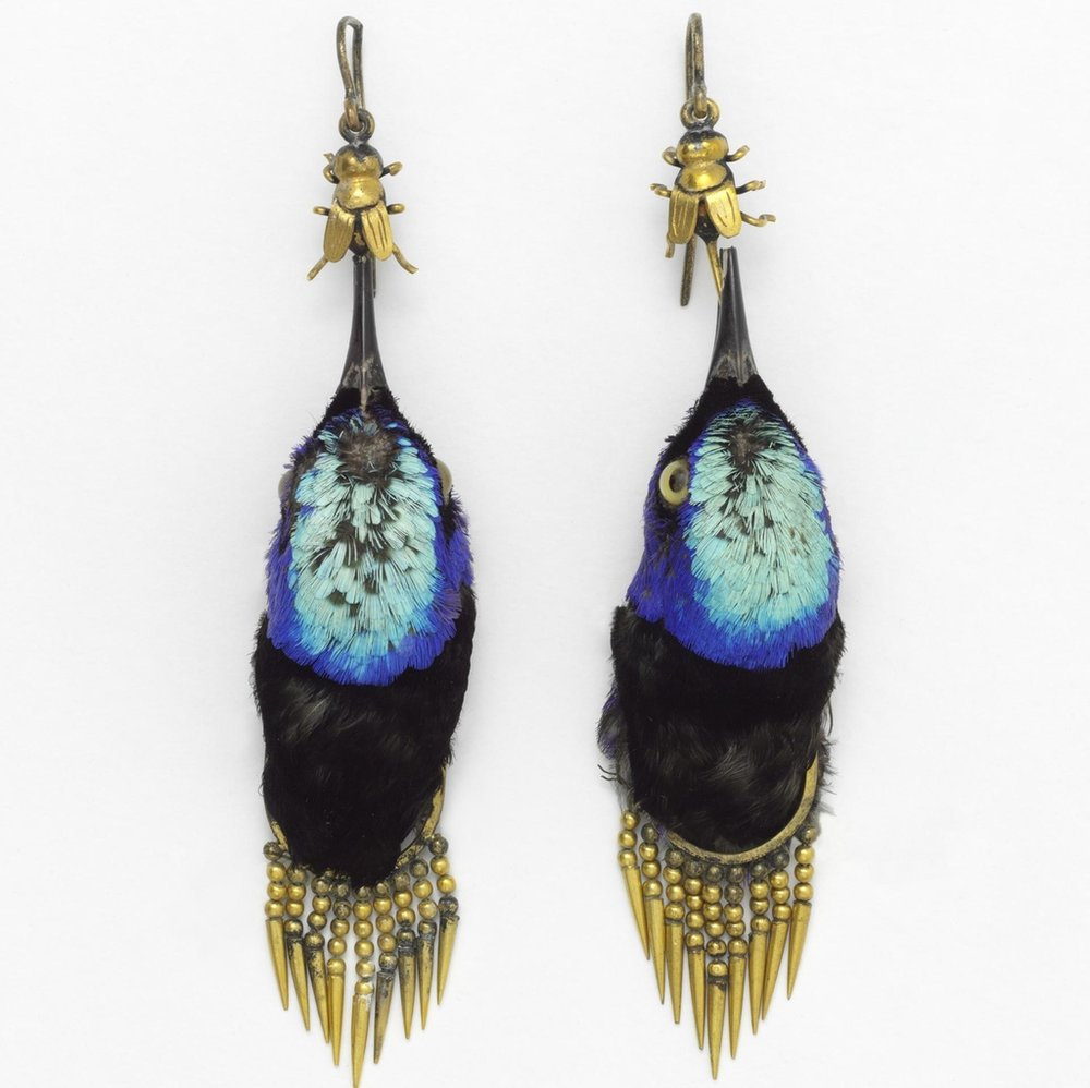 Earrings made from honeycreeper birds, circa 1875.  / Photo: Victoria & Albert Museum