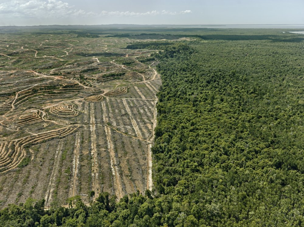 Clearcut #1, Palm Oil Plantation, Borneo, Malaysia 2016  / Photo: © Edward Burtynsky/courtesy Howard Greenberg and Bryce Wolkowitz Gallery, New York/Nicholas Metivier Gallery, Toronto.