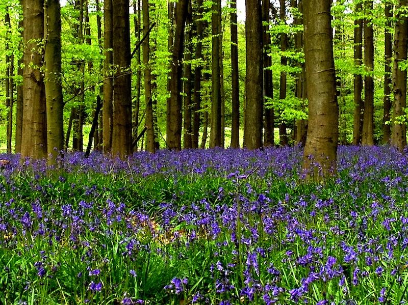my-halle-forest.jpg