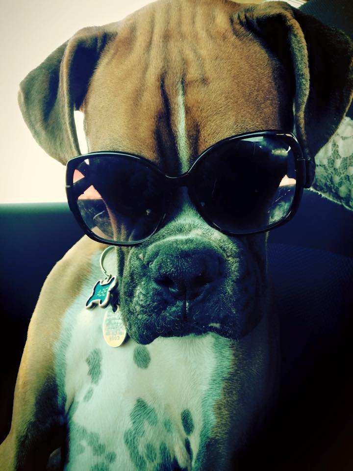 Abe the Cool Dog.jpg
