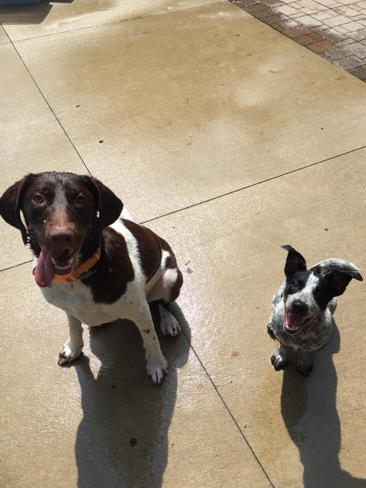 Auggie & Riley.jpg