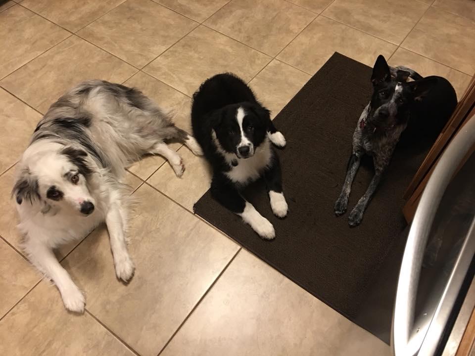 Bentley Blue, Baxter Black, & Astra Belle.jpg