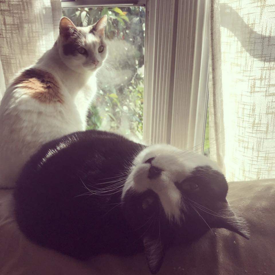 Coco & Jakey.jpg