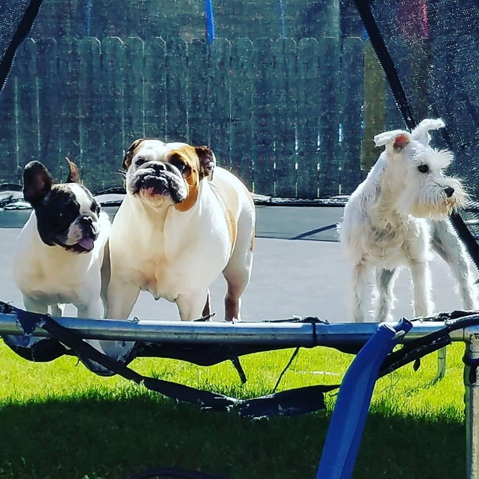 Gus, Dori, & Minka.jpg