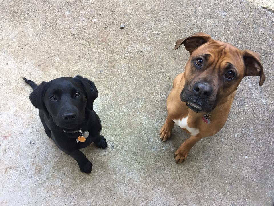 Koda & Duke.jpg