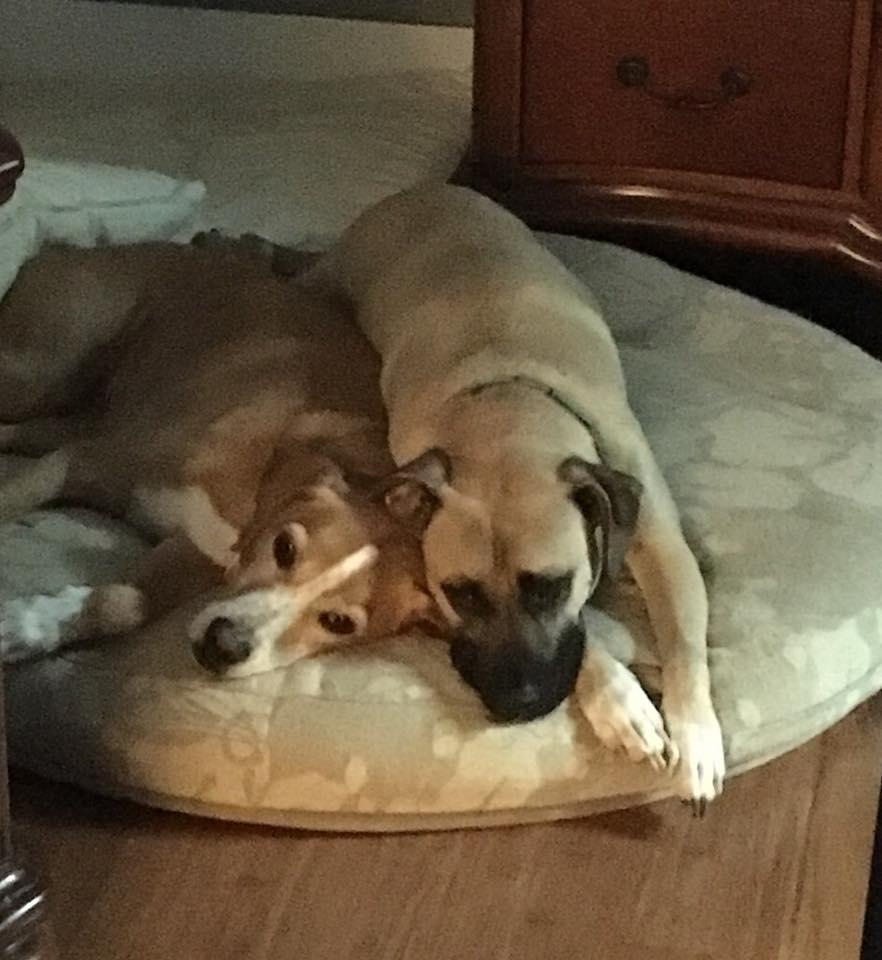 Roxie & Gus.jpg