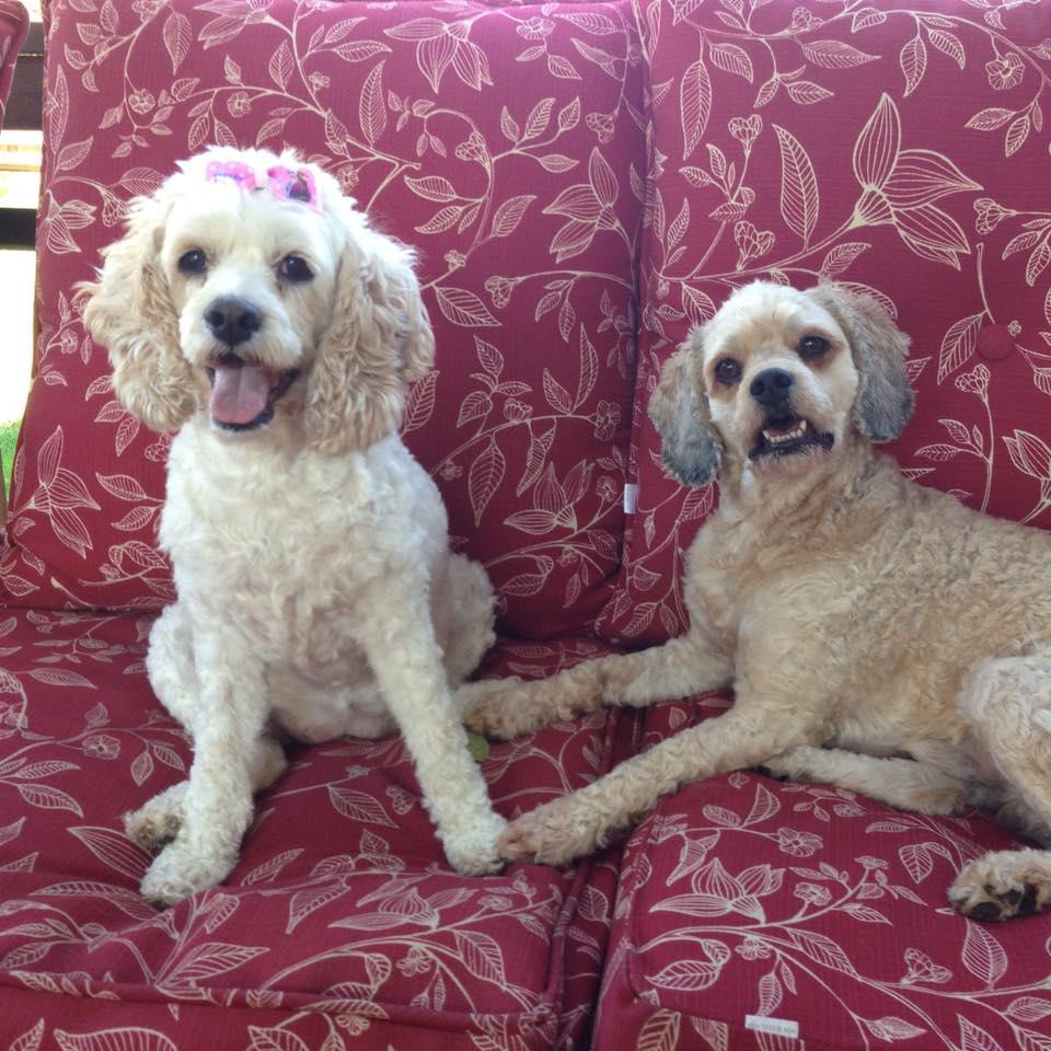 Shasta & Yogi Bear.jpg