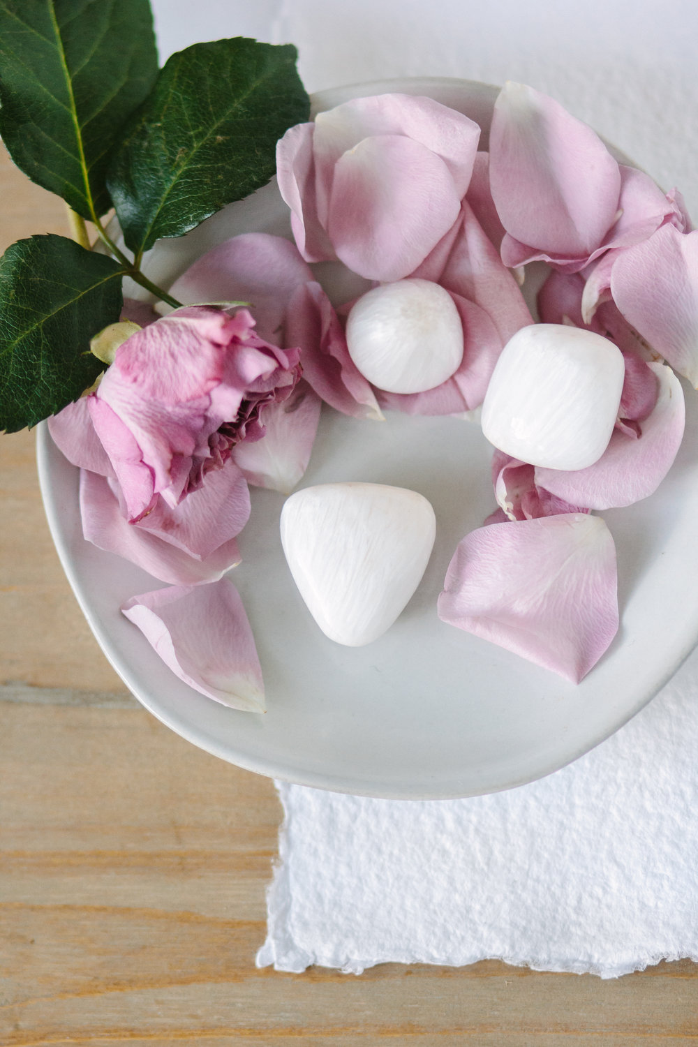 Scolicite and Roses-8690.JPG