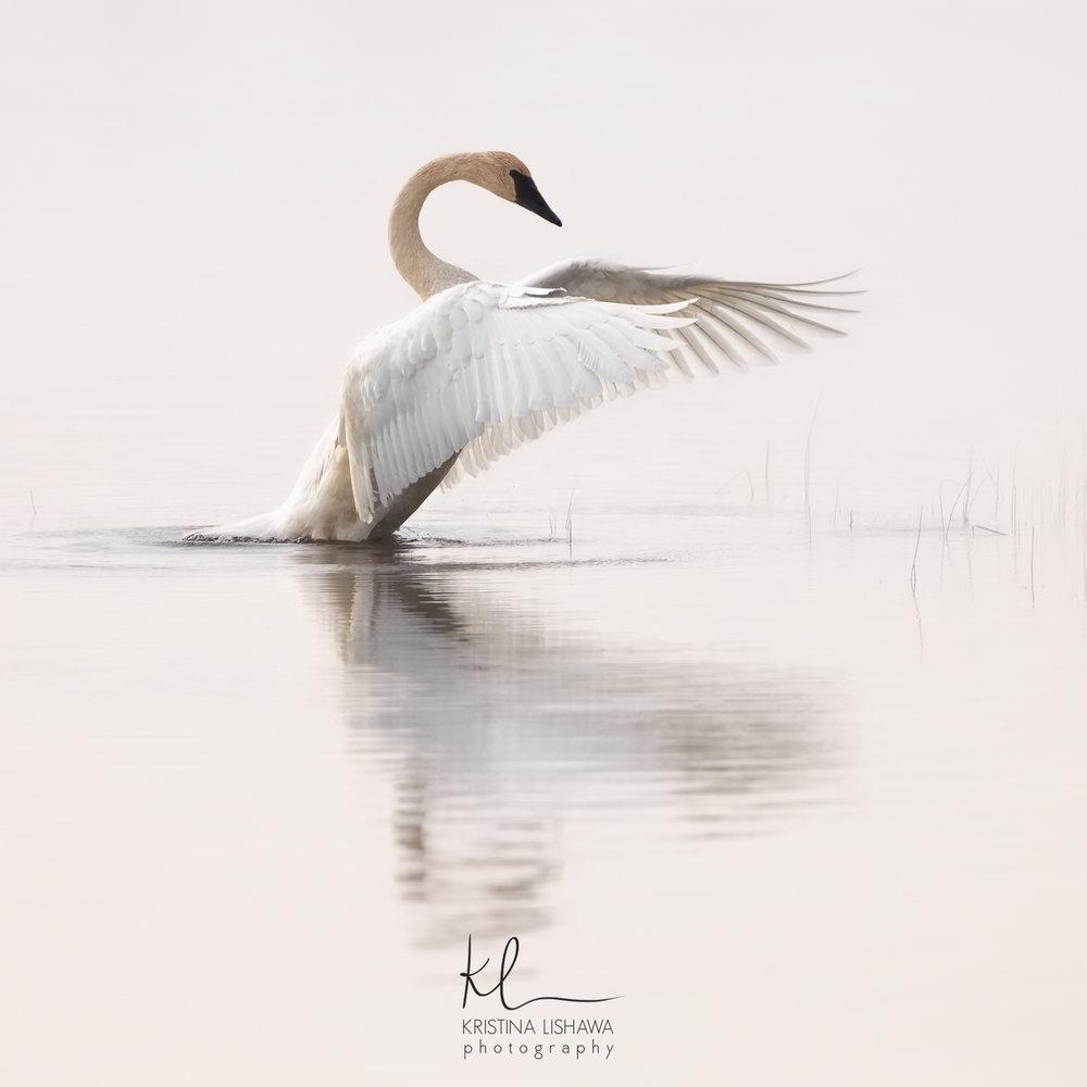 birds kristina lishawa photography