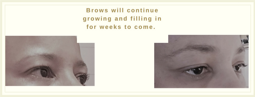 BBPRP Brows-text w-pic-boarder-2 box.png