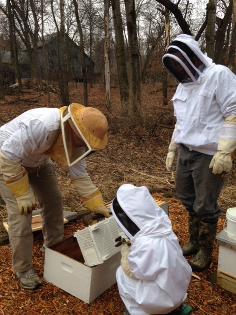 Introducing the first hive of honey bees to their new home.