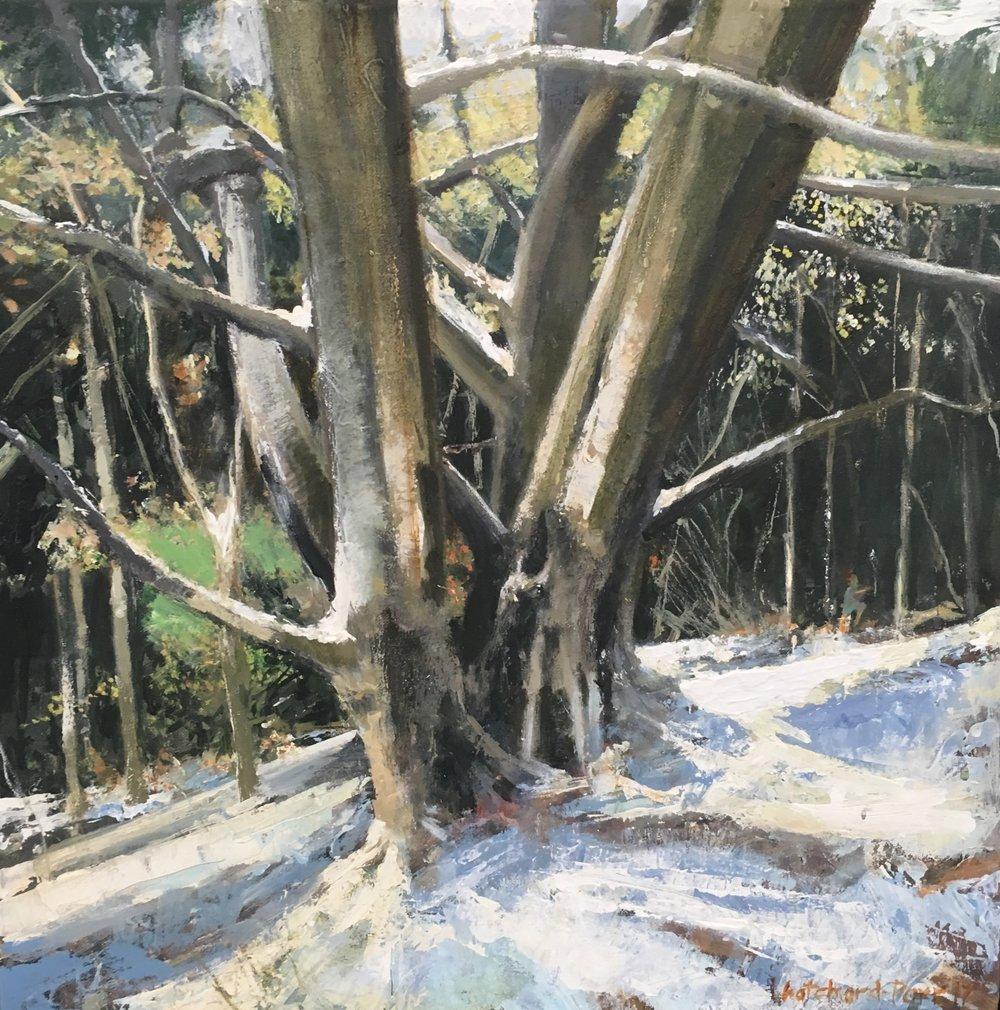 A Fabulous Tree, Acrylic on canvas, 40 x 40 cm, £550